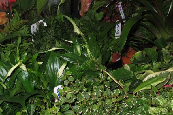 Купить живые растения на Рептилиуме